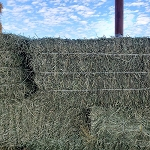Cow Hay by the Bale