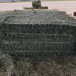 Horse Hay by the Bale